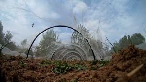 Netztunnel im Garten bastlen