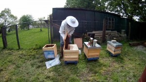 So kommt der Bienenschwarm in die Beute