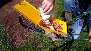 Speisemais im Garten anbauen
