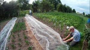 Gemüseschutznetz im Garten