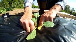 kompostierbare Mulchfolie