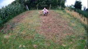 welche ist die beste Gruenduengung im Garten