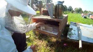 Bienenkiste Varroabehandlung