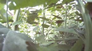 Gartendschungel