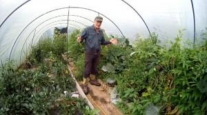 Gewaechshaus richtig bepflanzen