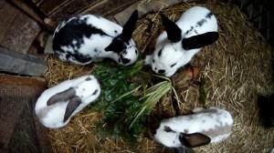 Kaninchen richtig fuettern