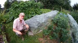 Pflanzenschutz Brokkoli