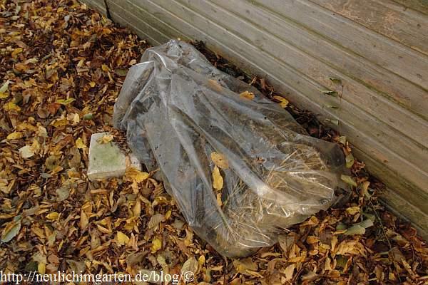 Geliebte Pilzzucht auf Stroh, oder von einem verpassten Pilzsueppchen @GO_22